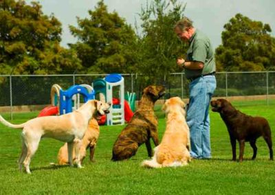 Jim-and-a-group-of-dogs-small-1